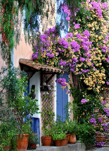 สวนสวย ดอกไม้สีม่วง