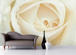 Wallpaper ผนัง ดอกกุหลาบสีขาว