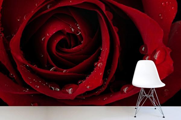 Wallpaper ผนัง ลายดอกกุหลาบสีแดง
