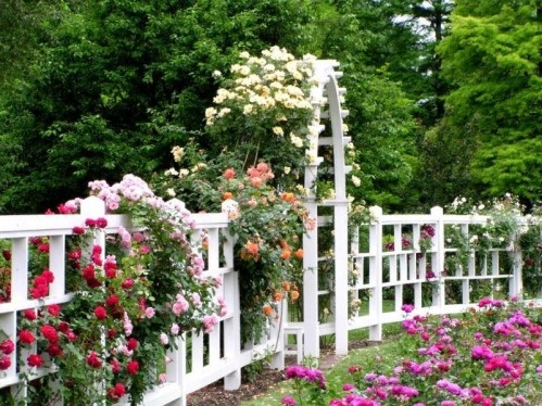 ไอเดียตกแต่งสวน รั้วบ้าน ประตูบ้าน ด้วยดอกไม้