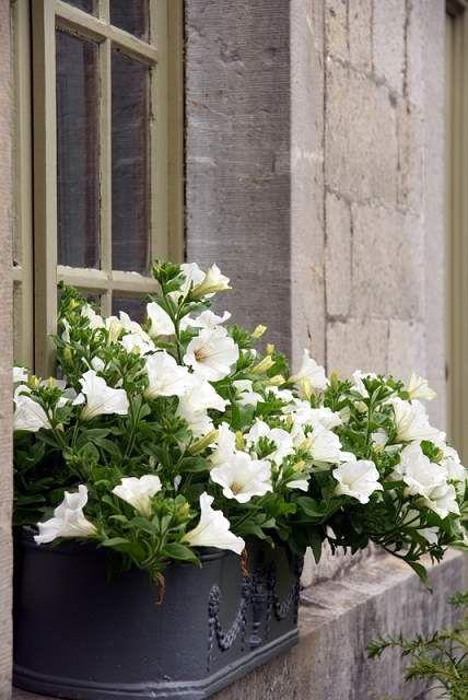 30 ไอเดียการจัดสวน กระถางดอกไม้