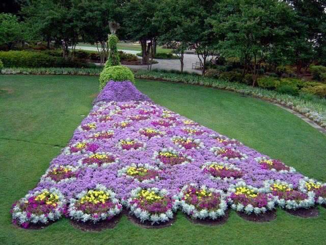 สวนดอกไม้ รูปนกยูง