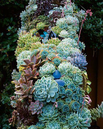 ไอเดียจัดสวน แต่งสวนด้วย ไม้อวบน้ำ Succulents