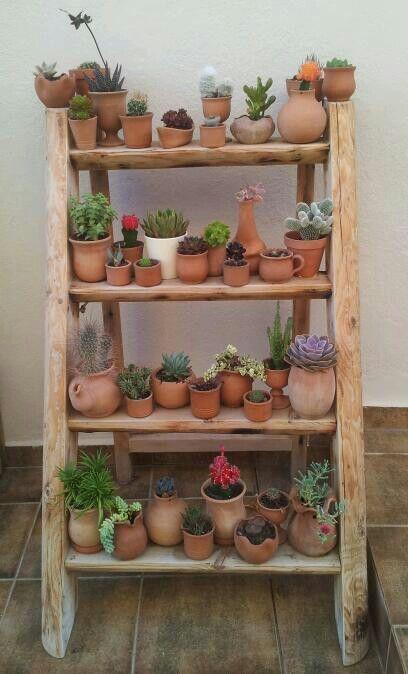 50 Succulents Home