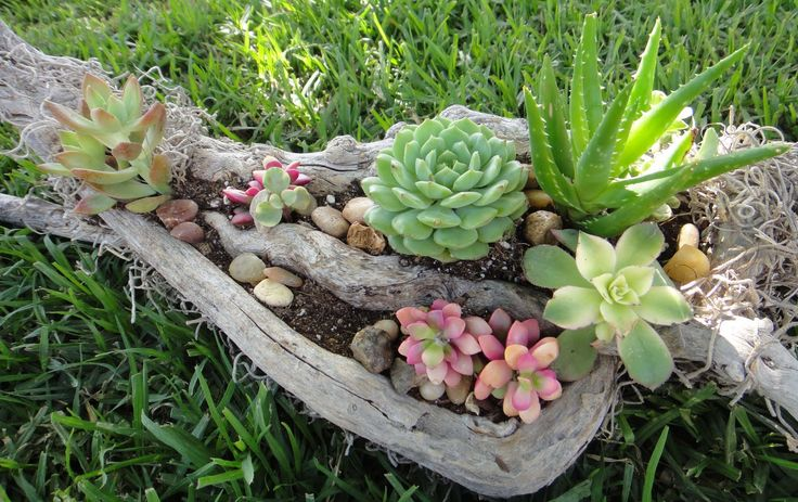 50 ไอเดียจัดสวน แต่งสวนด้วย ไม้อวบน้ำ Succulents บ้านสไตล์