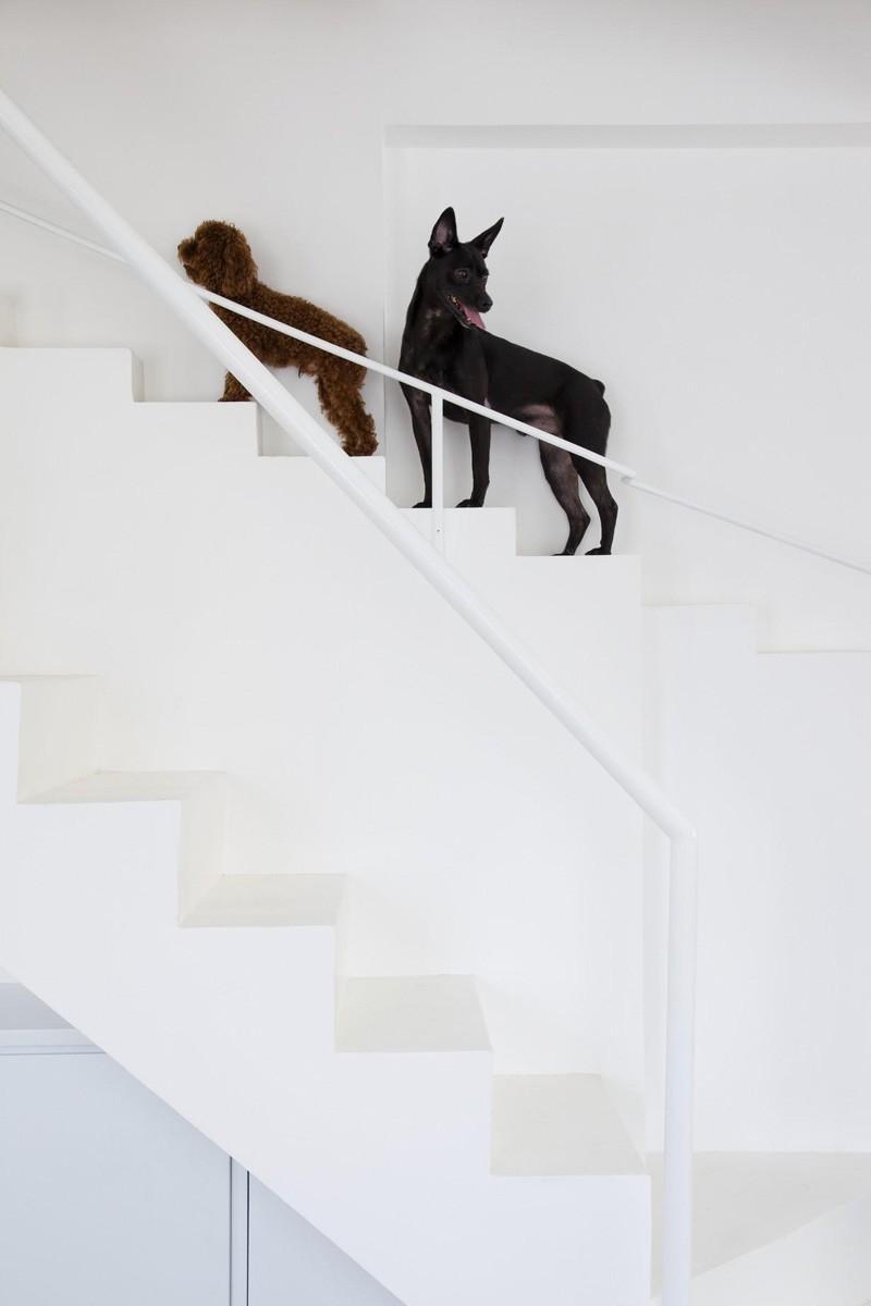 ไอเดียสุดเก๋ การทำบันได ให้สุนัขตัวเล็กๆ ขึ้นบ้าน
