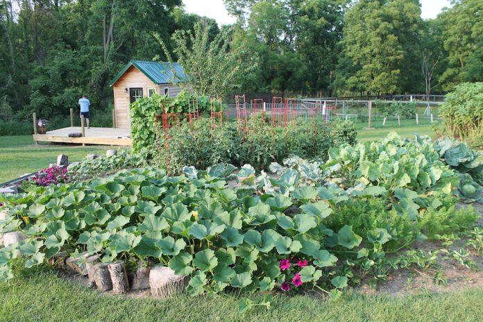 บ้านไม้หลังเล็ก มีพื้นที่สีเขียว ปลูกพืชผักกินเอง