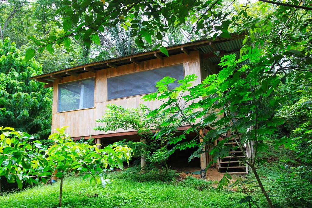 บ้านไม้ยกพื้น ในสวนในไร่ และป่าธรรมชาติ