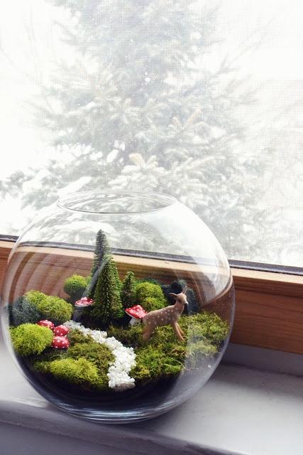 สวนหลอดแก้ว สวนขวดแก้ว (Terrariums) สวนขนาดจิ๋วเหมือนในนิยาย