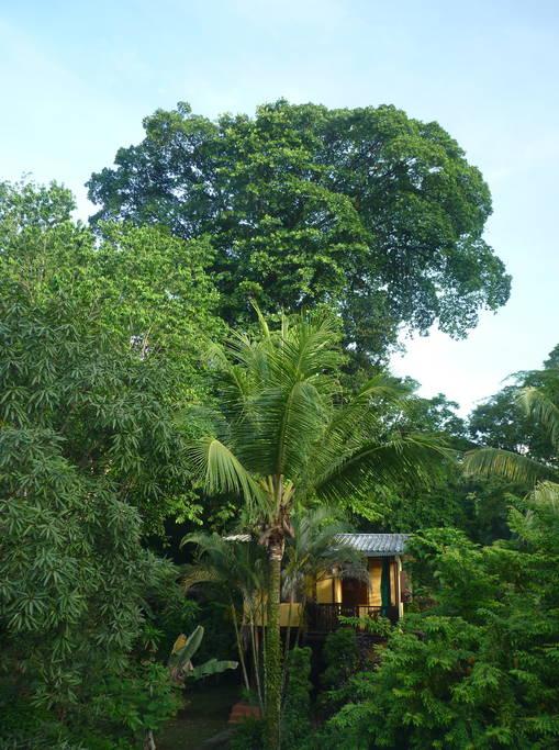 บ้านไม้กลางสวนป่า กลมกลืนกับธรรมชาติ เงียบสงบร่มรื่น