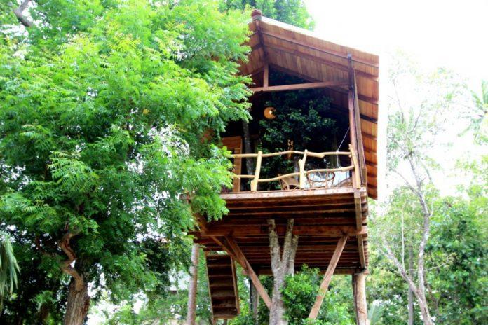 บ้านต้นไม้ยกพื้นสูง มีระเบียงนั่งเล่น ทำผนังกระจกใส