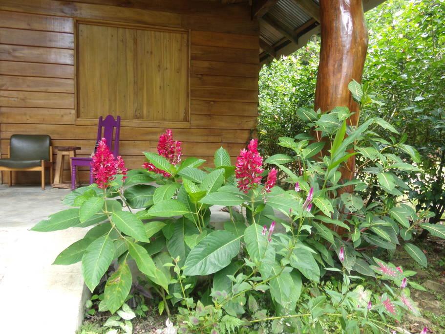 ไอเดียสร้างบ้านไม้ต่างจังหวัด มีชายคาและสวนรอบบ้าน งบประมาณหลักแสน