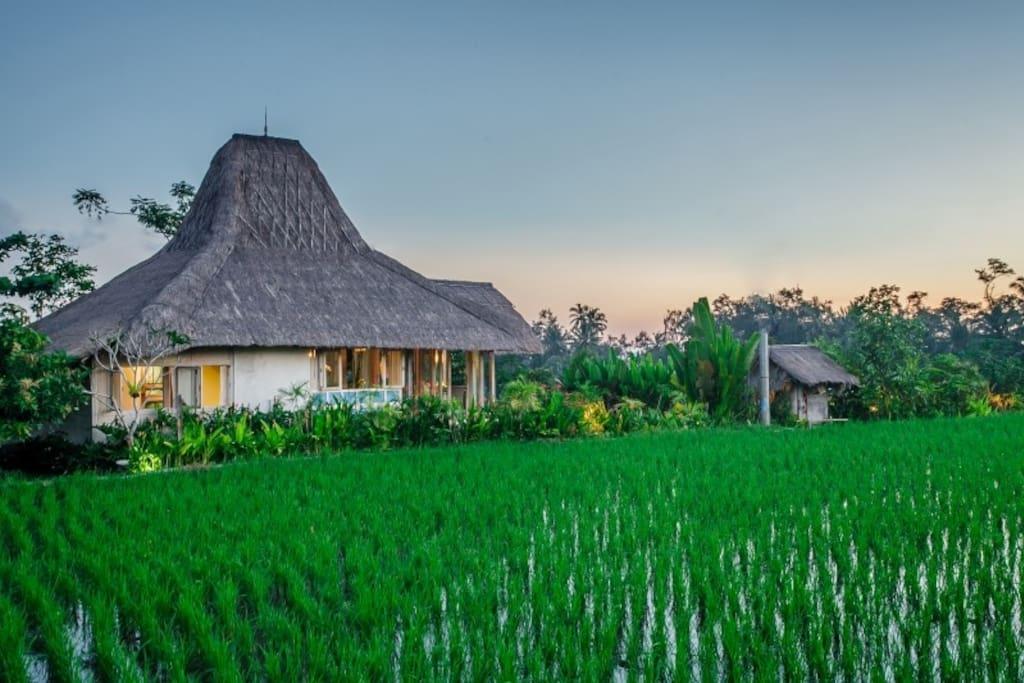 บ้านไม้ยกพื้นแบบโบราณดั้งเดิมสไตล์บาหลี รอบล้อมด้วยสวนทรอปิคอลและท้องทุ่งนาสีเขียว