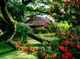บ้านโครงสร้างจากดินและไม้ ที่มีต้นไม้ใหญ่ยักษ์แผ่กิ่งก้านให้ร่มเงา สวยงามเหมือนในเทพนิยาย