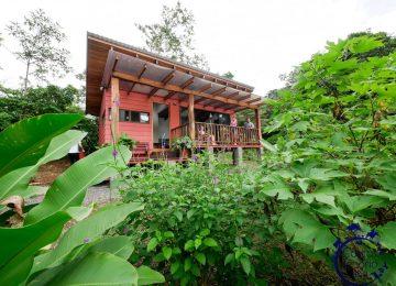 บ้านยกพื้นหลังเล็ก ทรงโมเดิร์น หลังคาเพิงหมาแหงน มีระเบียงชมวิวสวนและป่าธรรมชาติด้านหน้า