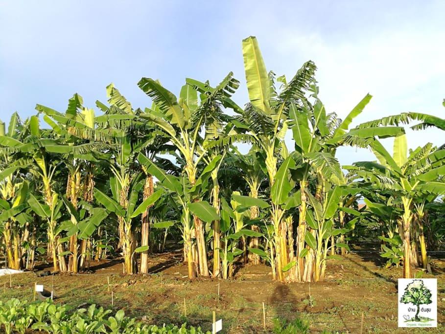 สวนเกษตรอินทรีย์