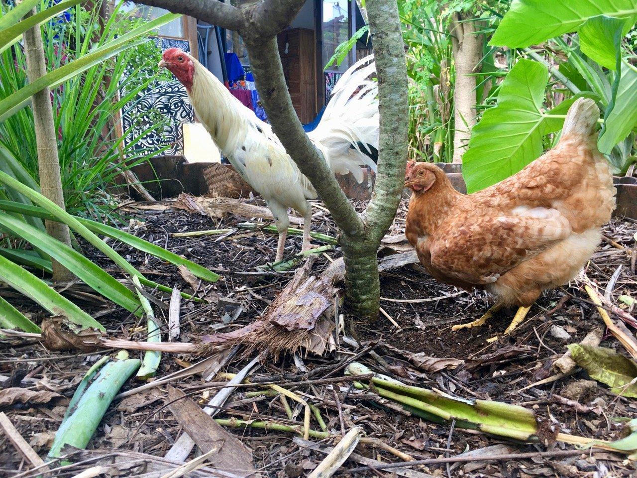 ฟาร์มสเตย์ไม้ไผ่สุดฮิป ใช้ชีวิตชิว ๆ อยู่กับสวนผัก และการเลี้ยงไก่