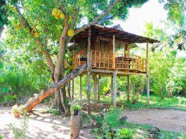 บ้านต้นไม้ยกพื้นสูง ที่พักแบบ Eco-Retreat เข้าถึงและใกล้ชิดกับธรรมชาติ